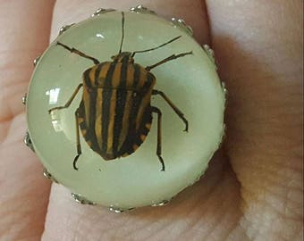 Beetle, Beetle ring, Taxidermy, Taxidermy ring, Oddities, Bug, Bug ring, MsFormaldehyde, Insect