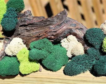 Reindeer moss-Deer foot moss-Fluffy Lichens-2 oz bag Preserved Lichens-4 Colors in assorted sized spongy soft balls