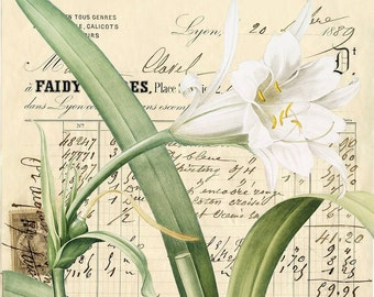 Digital Image French Floral Script You Print Digital Collage Romantic White Green