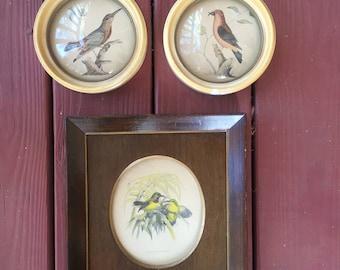Vintage framed bird pictures including peter watson studios