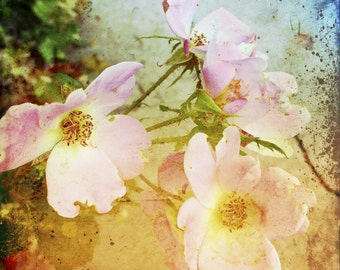 Rose Wall Decor - Shabby Chic Art - Flower Photography