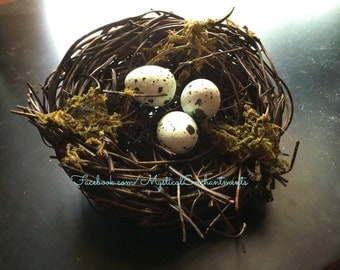 Petite Spring Birds nest with moss and spotted eggs
