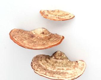 resinn shelf mushroom magnet set