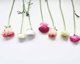 flower photography, pink ranunculus, botanical print, ranunculus, spring, nature photo, paris, still life, peach, floral home decor