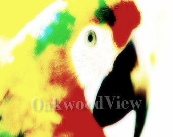 Bright Macaw, Parrot Print, Brand New Surreal Giclee Art, Color 4x6 Matted Bird Picture in Green 5x7 Mat, Avian Wildlife, FREE SHIPPING