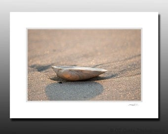 Seashell Beach Small Matted Photography Print, LBI, Cubicle Decor, Ready for Framing, Fits 5x7 inch Frame