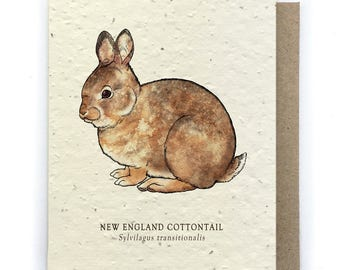 Cottontail Rabbit Greeting Card - Plantable Seed Paper - Blank Inside