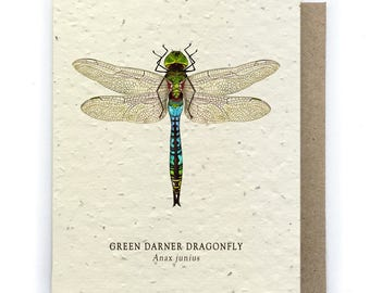 Green Dragonfly Greeting Card - Plantable Seed Paper - Blank Inside