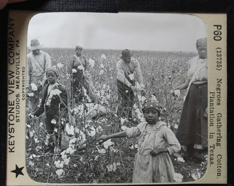Glass slide labeled, Negroes Gathering Cotton at Texas Plantation