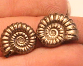 14 - 15mm Pair of Promicroeras iron pyrite ammonite fossils found on the Jurassic coast UK  0009