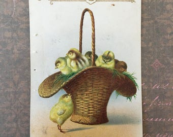 Basket of Chicks Edwardian Era Easter Postcard for Project