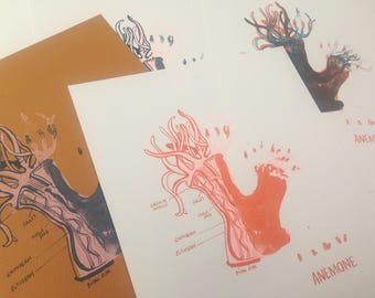 Sea Anemone screenprints