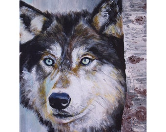 Northern Timber Wolf