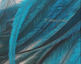 Turquoise Craft Feathers Cruelty Free Craft Feathers Turquoise Feathers Turquoise Emu Feathers DIY Accessories Hair Feather Supplies, 10 pcs