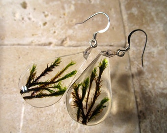 Moss, Orthotrichum sp.  teardrop earrings, Moss earring, plant jewelry, leaf jewellery, bryophyte, woodland, forest, nature, surgical steel