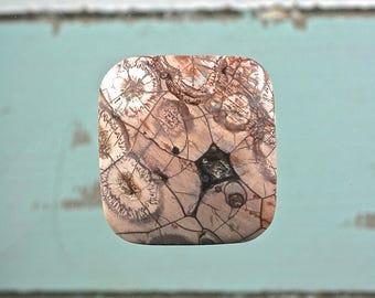 Birds Eye Rhyolite gemstone freeform square cabochon 31x30mm
