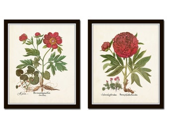 Antique Peony Print Set No. 5, Botanical Prints, Botanical Art, Wall Art, Peony, Vintage Botanical Art, Besler, Red Peony Prints, Giclee