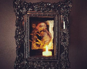 Mummified Fetal Pig in Black Shadowbox