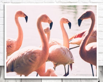 Flamingo Photography, Pink Flamingo Photo Print, Animal Wall Art, Flamingo Print, Printable Wall Art, Flamingo Printable, Digital Print