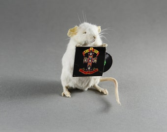 Vinyl Record Taxidermy Mouse Custom LP of your Choice
