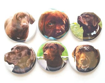 Dog Magnets, Chocolate Lab, Refrigerator Magnet, Fridge Magnet, Labrador Retriever Dogs, Dog Lover Gift, Chocolate Labs, Lab Gift, 6/Set