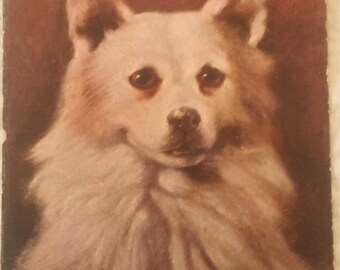 1906 Antique Spitz  Dog art postcard