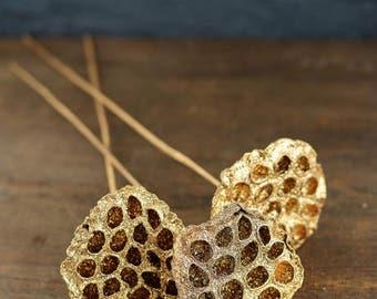 Gold Metallic Natural Lotus Pod Stems (3 Stems)