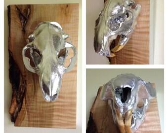 Gilded Beaver Skull Wall Art