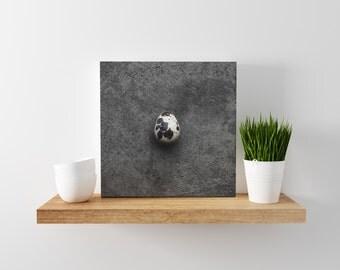 quail egg v. one // food photography print // canvas print // kitchen wall art // dining room wall art // rustic wall art // egg print