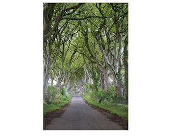 Tree Home Decor, Dark Hedges Art Print, Trees Photography, Tree Art, Nature Photograph, Irish Home Decor, Green Decor  - The Dark Hedges