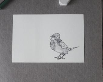 Sparrow Drawing Postcards,  Sparrow Postcard, Little Bird Drawing, Detailed Bird Art, Bird Illustration Homemade Stationery, 3 SET, A6 Print