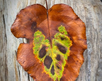 Fall Leaf Photo | Heart Photo Art | Autumn Leaf Photo | Heart Leaf Print | Autumn Leaves Art | Heart Shape Leaf | Fall Colors Rustic Photo|