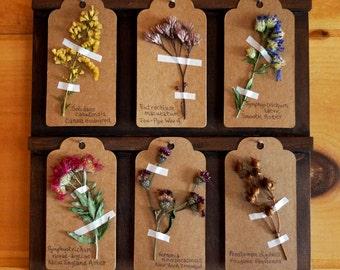 Wildflowers Herbarium