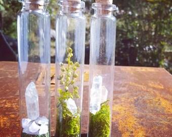 Glass Crystal Terrarium Specimen Vial