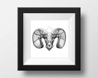 Diamond Ram Print (Aries) 8.5in x 11in