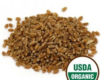 Wheatgrass Sprouting Seeds - Certified Organic