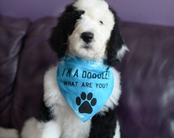 I'm a Doodle! What are you? Bandana