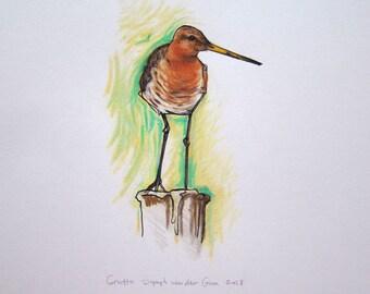 Godwit original drawing