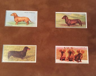 Four Vintage Dachshund Cigarette Cards Matted to 8 x 10