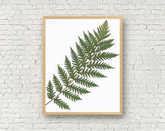 Giant Chain Fern - Herbarium Print - Woodwardia - Pressed Plant Specimen - Botanical Wall Art - California Plant Art - Fern Print - Man Fern
