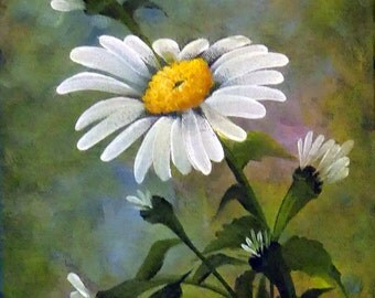Miss Daisy  8x10  Oil on Canvas