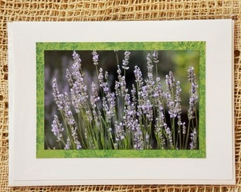 Russian Sage note card