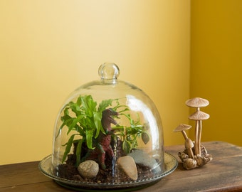 Bell Jar Terrarium III