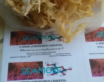 Irish Moss Ocean C - Food (Common Gracilaria)