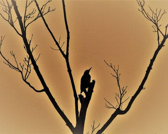 Pond House Birds Silhouette Greeting Card Series (Set of 8)