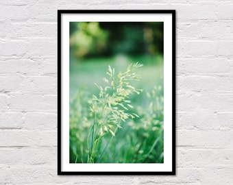 Field Grass Print, Green Printable Art, Botanical Art Print, Natural Landscape Photography, Green & Yellow Wall Printable, Instant Download