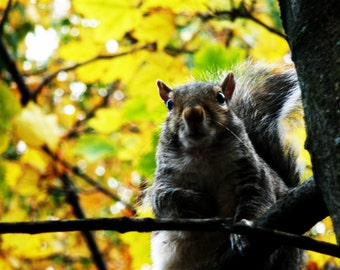 Surprised Squirrel in Autumn; Boston, MA; color photograph; animal wall art; bedroom; baby