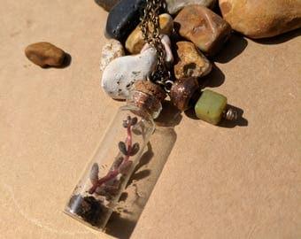 Micro Terrarium Pendant Necklace