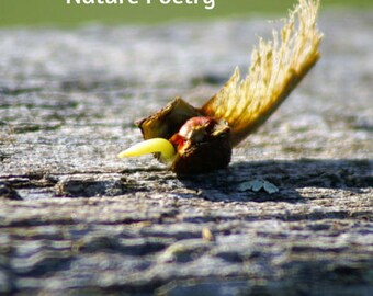 Unfurled, Nature Poetry and Prose