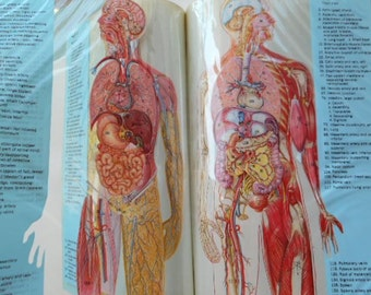 Mid Century Medical Book Set Dorland's Illustrated Dictionary and Today's Health Guide
